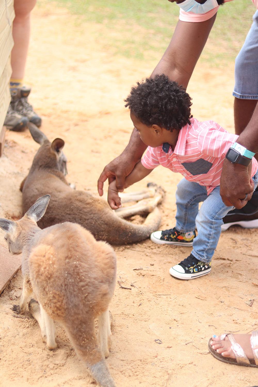 alabama gulf shores zoo